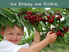 Singular und Plural - Pluralbildung  - Theorie - DaF