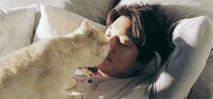 gong yoo gong ji cheol gong ji chul kactor kdrama korean actor korea cf my gifs mine gy trying to kiss the cat <3 i think this is his cat? seriously cat goals yall HE LOOKS SO GOD DAM PERFECT   sofarawayinthemilkyway.tumblr.com