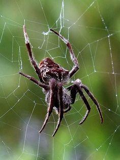 spider | Flickr - Photo Sharing!