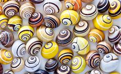 Can Tree Snails - Henry Domke Fine Art