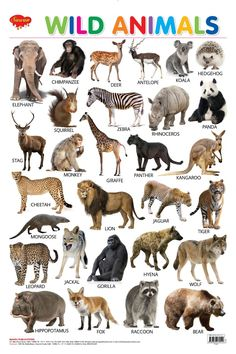 You searched for Wall charts | Hello Book Mine Animal Masks For Kids, Animals For Kids, Mask For Kids, Learning English For Kids, English Lessons For Kids, Wild Animals List, Animals Name In English, Preschool Charts, Animals Kissing