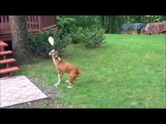 Cute Dog Playing with Balloon the balloon dog Balloon Dog, The Balloon, Cute Dogs, Balloons, Youtube, Globes, Balloon, Funny Dogs, Youtubers