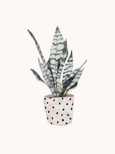 Pot plant sketch