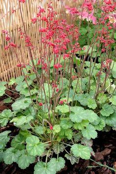 plante r pulsive anti moustiques lesquelles choisir tendances jardin pinterest anti. Black Bedroom Furniture Sets. Home Design Ideas