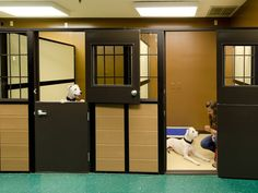 Mason Company's Luxury Walk-In Dog Suites