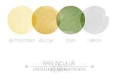 ranunculus | fresh hues brushstrokes