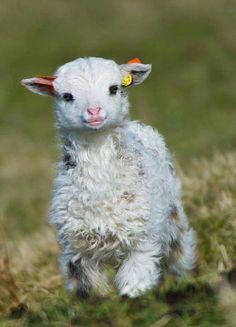 Shaun the chic sheep:)