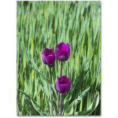 Trademark Fine Art Healing Tulips Canvas Art by Kurt Shaffer, Size: 35 x 47, Green
