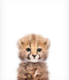 Baby Gepard Print Safari Kindergarten Kunst Baby Tier Wandkunst die Krone Dru B… Baby Cheetah Print Safari Nursery Art Baby Animal Wall Art The Crown Dru B … – Cute Baby Animals, Animals And Pets, Funny Animals, Animal Babies, Happy Animals, Safari Animals, Wild Animals, Baby Print, Art Pariétal