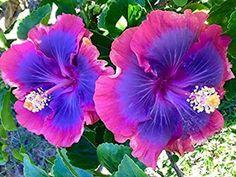 Rare Flowers, Exotic Flowers, Tropical Flowers, Amazing Flowers, Pretty Flowers, Fresh Flowers, Beautiful Flowers Garden, Exotic Flower Tattoos, Colorful Flowers