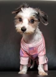 Sonny is an adoptable Shih Tzu Dog in Bowmanville, ON. Meet Sonny. 4lbs of gorgeous! Sonny and his friends were living in the barn of a woman who called herself a breeder. Well, puppy mill is more l...