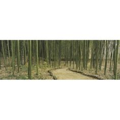 Bamboo trees on both sides of a path Kyoto Japan Canvas Art - Panoramic Images (36 x 12)