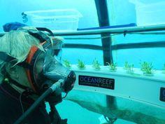 Un huerto debajo del mar - Ecocosas