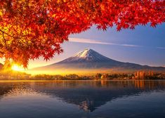 Autumn in Japan 2020: Fall Foliage Forecast | LIVE JAPAN travel guide Japan Travel Guide, Asia Travel, Japan In November, December, Indoor Attractions, Fuji Mountain, Day Trips From Tokyo, Monte Fuji, Travel Directions