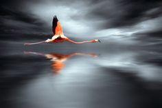 Elegant Flight by Jo