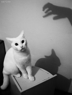 The Horror by MarinaCoric...♥...