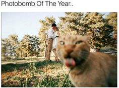 Very interesting post: TOP 75 Funny Cats Memes.сom lot of interesting things on Funny Animals, Funny Cat. Funny Captions, Funny Cat Memes, Dog Memes, Funny Cats, Hilarious, Funny Animal Clips, Animal Memes, Funny Animals, Cute Animals