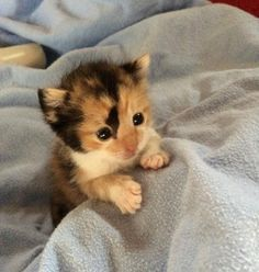 Meet Kairi, a tiny survivor found on the road just hours after she was born. See her story: http://lovemeow.com/2014/09/tiny-calico-kitten-rescued-hours-birth/…