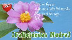 ¡Felicidades Madre! Para mi hoy es el día más lindo del mundo, hoy es el día tuyo, Mamá