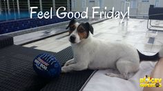 I feel so good! Feel Good Friday, Amazing Adventures, Feelings, Dogs, Fun, Animals, Animales, Animaux, Pet Dogs