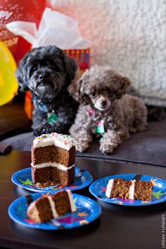 Dog Birthday Carrot Cake with Neufchâtel Cheese Frosting (Diy Dog Cake) Dog Cake Recipes, Cheese Recipes, Dog Food Recipes, Shaped Cake Pans, Puppy Treats, Puppy Food, Moist Carrot Cakes, Birthday Desserts, Animals