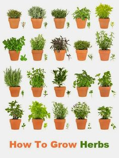 101 Gardening: How to Grow Herbs Indoors #Herbs