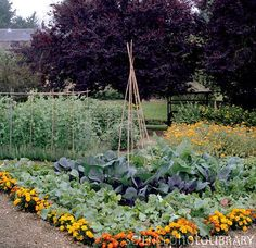 Plant a border of marigolds around your vegetable garden. Looks pretty and helps repel pests!