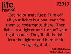 Lifehacks fruit flies this seems a tad violent but it if works it works man