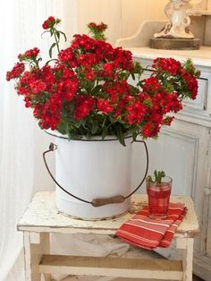 red flowers in white pot