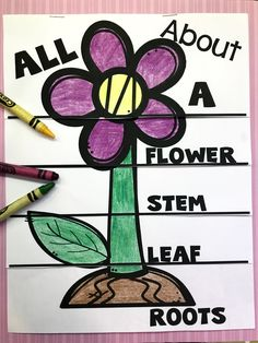 New Plants Kindergarten Pictures Ideas Kindergarten Pictures, Kindergarten Science, Preschool Pictures, Kindergarten Worksheets, Parts Of A Flower, Parts Of A Plant, Science Crafts, Preschool Activities, Plant Lessons