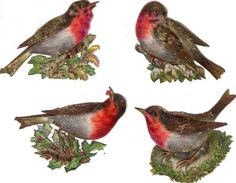 4 Victorian Die Cut Scrap Colorful Birds on a Branch c1880 Save time & money with FREE Auctiva Image Hosting.Create listings that get noticed! with Auctiva's 1,800+ Templates. Auctiva, The complete eBay Selling Solution.