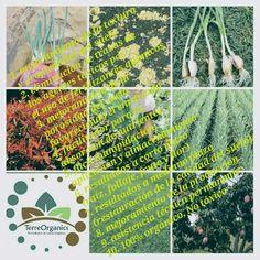 Porqué usar TerreOrganics? Ventajas y Beneficios: 1. Mejoramiento de la textura y propiedades del suelo 2. Eliminación de trazas de los agentes tóxicos por el uso de fertilizantes químicos  3. Mejoramiento de la porosidad del suelo favoreciendo el enraizado  4. Facilitador para la absorción de nutrientes  5. Fácil manipulación, aplicación y almacenamiento  6. Resultados a corto plazo (raíz, follaje, fruto y flor) 7. Resultados a mediano plazo (restauración de la calidad del suelo) 8…