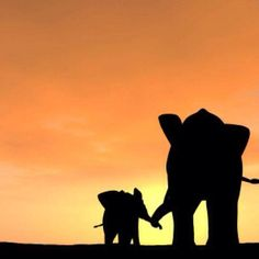 Mama and baby elephant silhouette Photo Elephant, Elephant Love, Elephant Art, African Elephant, African Animals, Mom And Baby Elephant, Elephants Never Forget, Save The Elephants, Baby Elephants