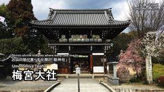Kyoto - 'Umenomiya Taisha (梅宮大社)'