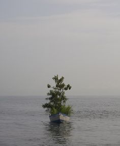 Kim Myeongbeom - Sculpture & Art Installations - Tree Boat