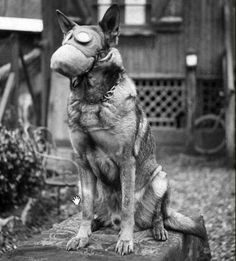 WWII: Dogs in Gas Masks ♡-tblazes.