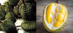 15 extrañas frutas que tal vez no conozcas   La Bioguía