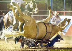 Horse landing on its back