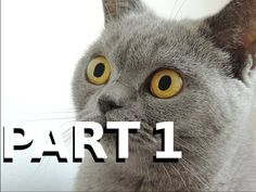 Funny Cats Compilation 2015! [PART1] [½h HD *1080p*] - http://www.recue.com/funny-cats-compilation-2015-part1-%c2%bdh-hd-1080p/