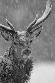 schitterend mooi plaatje……. Winter Storm, Winter Time, Winter Season, Winter Months, Nature Animals, Animals And Pets, Cute Animals, Wild Animals, Wildlife Nature