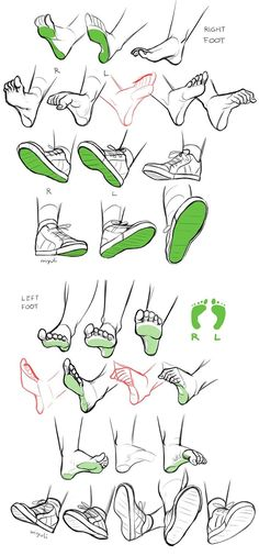 Foot references anatomy