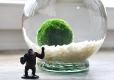 Marimo Moss Balls basically need zero care (you just have to change the water and wash it off once a week). It does nothing, just sits there looking cool.