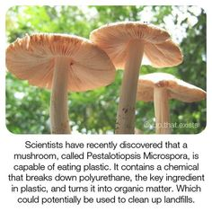 Did you know scientists have found a way to turn plastic into organic matter? This revolutionary mushroom could be used to clean up… Save Our Earth, Save The Planet, The More You Know, Did You Know, Angst Quotes, Wtf Fun Facts, Random Facts, Cool Facts, Funny Facts
