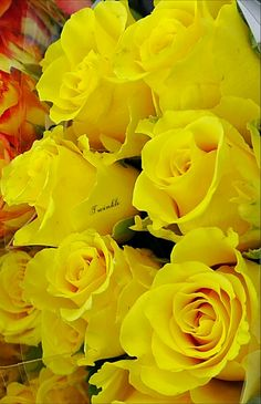 Photo Amazing Flowers, Love Flowers, Beautiful Roses, Simply Beautiful, Beautiful Things, Gardenias, Roses Only, Aesthetic Roses, Seed Packaging