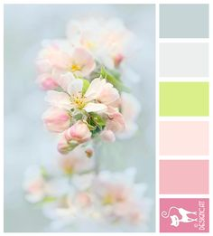 Apple Blossom - blue, green, pink, pastel - Designcat Colour Inspiration Pallet