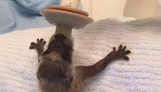 Cab Driver Rescues Tiny Baby Raccoon From Noisy Bar - The Dodo