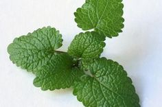 Lemon balm in tea or juice takes away bloating every time!
