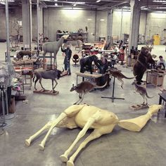 Taxidermy lab prepping for the new (2003) Mammal Hall at NMNH