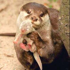 Proud new momma otter.