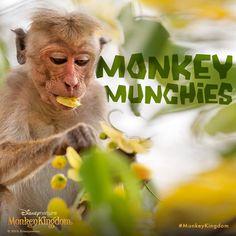 Sometimes you just crave a good old flower petal. #MonkeyKingdom